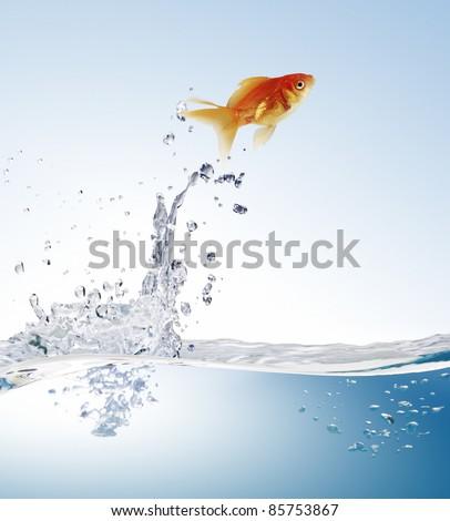 goldfish jumping - stock photo