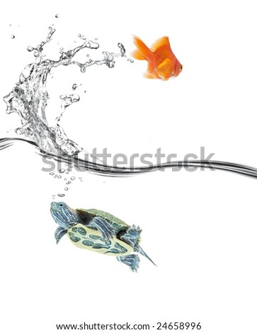 goldfish jumping away while turtle still stay