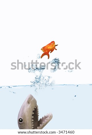 Goldfish jumping from a shark attack - stock photo
