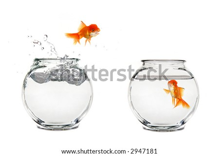 Goldfish Jumping From One Bowl to Another - stock photo