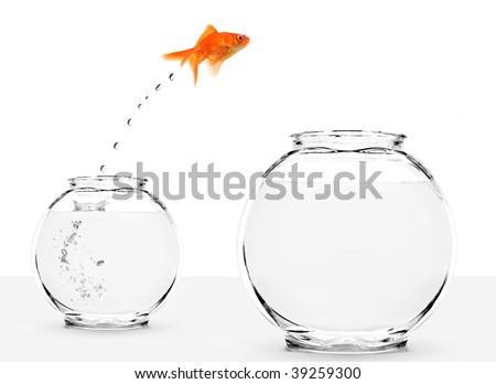 goldfish jumping from small to bigger bowl isolated on white background - stock photo