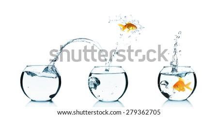 Goldfish jumping into glass aquarium, isolated on white - stock photo