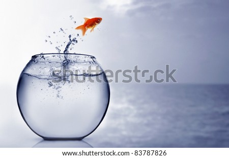 Goldfish jumping into the sea - stock photo
