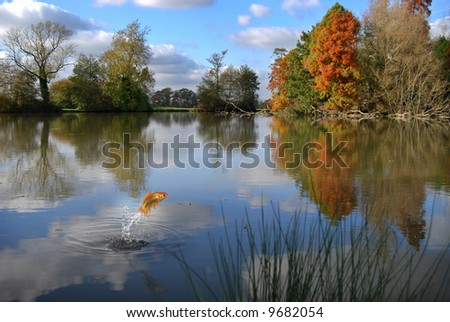 Goldfish jumping out of a calm lake in autumn