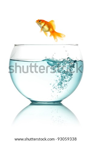 Goldfish jumping out of fishbowl isolated on white - stock photo
