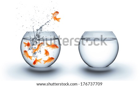 goldfish jumping out of the water - escape and improvement concept - isolated on white