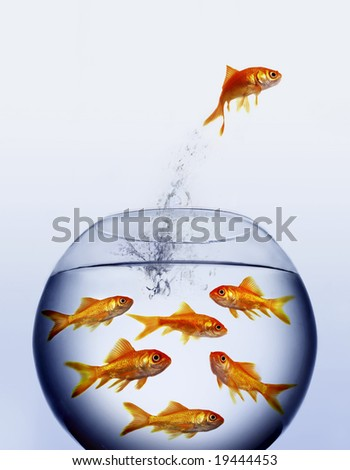 goldfish jumping out of the water from a  crowded bowl - stock photo