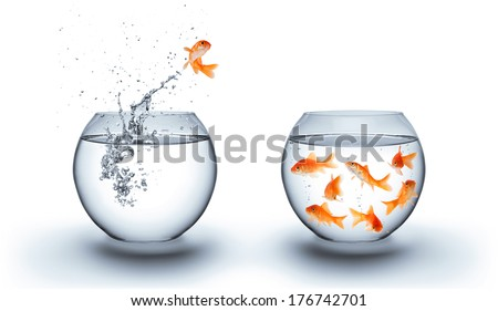 goldfish jumping out of the water - team concept  - stock photo