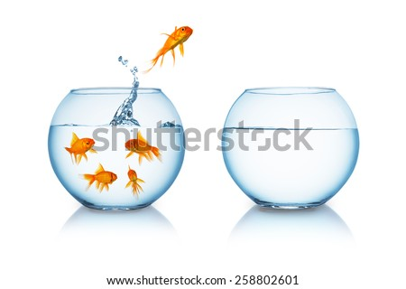 goldfish jumps in to a fishbowl in to liberty - stock photo
