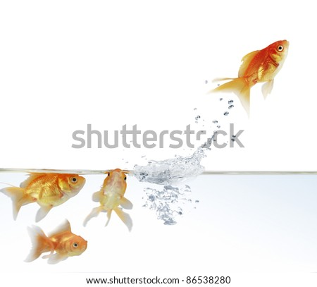 goldfish leaping out of the water - stock photo
