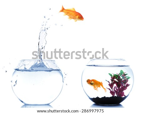 goldfish looking surprised at another fish jumping off his fishbowl - stock photo