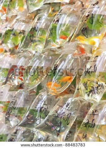 Goldfish sale in Hong Kong - stock photo