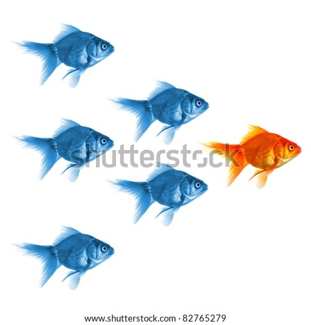 goldfish showing leader individuality success or motivation concept - stock photo