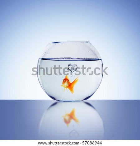 Goldfish swim - stock photo