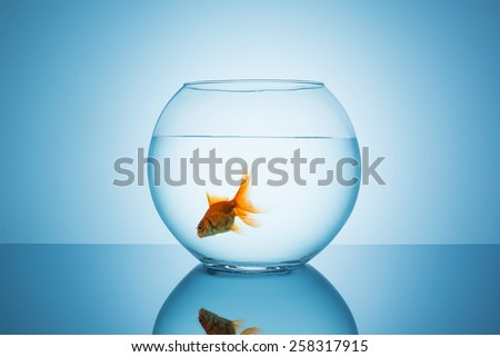 goldfish swims alone in a fishbowl - stock photo
