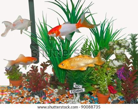 Goldfish tank isolated on white - stock photo