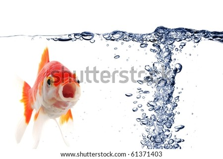 goldfish under water with bubbles and copyspace on white - stock photo