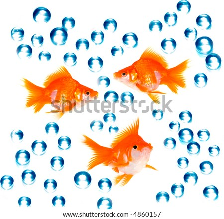 goldfish with bubbles - stock photo