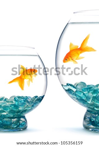 Goldfishes in aquarium on a white background - stock photo