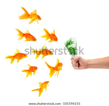 Goldfishes with money on a white background - stock photo