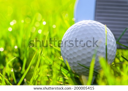 golf ball in the grass early in the morning - stock photo
