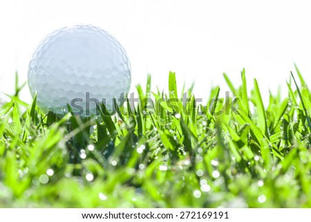 golf ball on green grass with drops water - stock photo