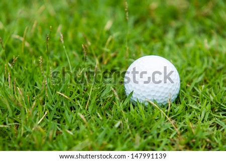Golf ball on the green grass background