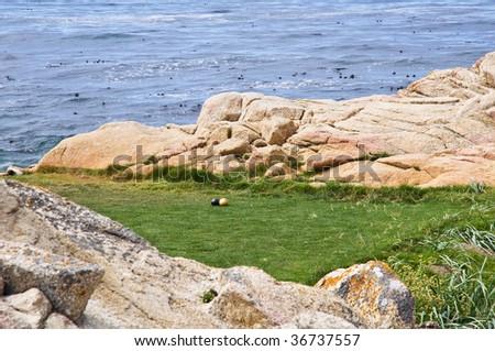 Golf course - North California coast - stock photo