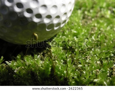Golf sometimes lands you in the rough. Here a nice soft green mossy surface on a spring day. - stock photo