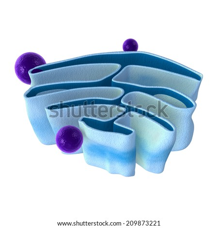 Golgi apparatus - stock photo