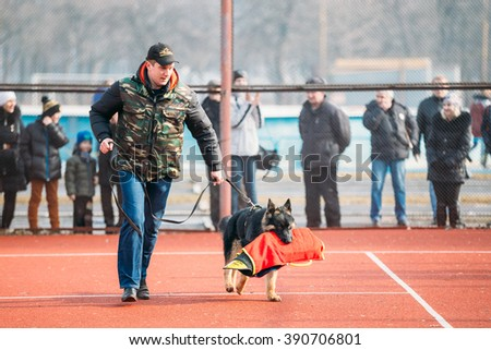 GOMEL, BELARUS - February 21, 2014: German shepherd dog training in Gomel Regional sports club and decorative dog-breeding. Bitting dog. - stock photo