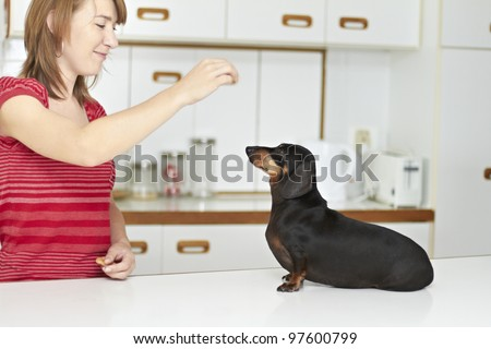 Good black Dachshund dog being rewarded by young lady - stock photo