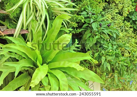 Good design of ornament plants - stock photo