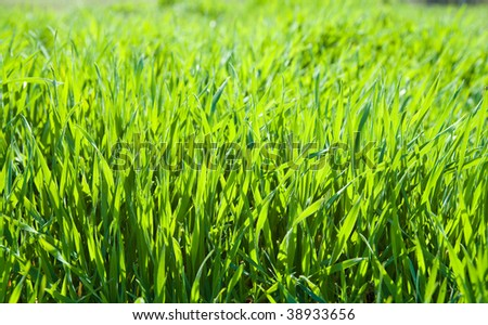 good green grass as background