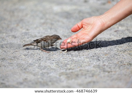 Good man helps and feeds the tiny one by one in sequence sparrow, environmental protection