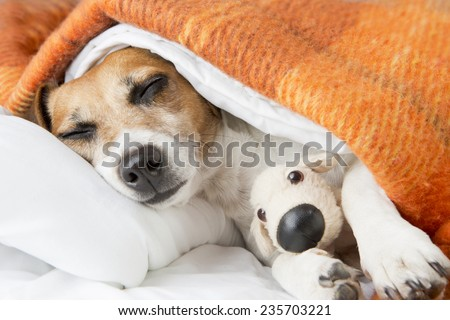 Good night and Sweet dog dreams with little toy friend - stock photo