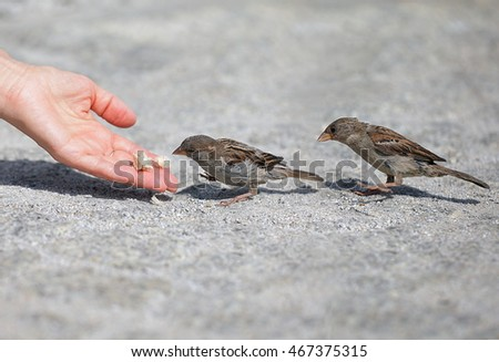 Good nobody man helps and feeds the tiny sparrow, environmental protection