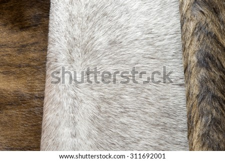 good quality fur leather in various colors - stock photo
