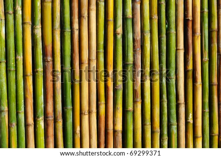 good quality natural bamboo texture - stock photo