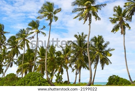 Good seascape view  with palmtrees on the island Gan in Indian  Ocean, Maldives