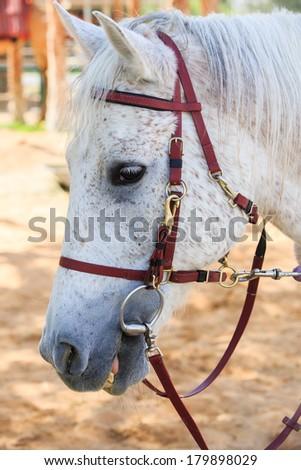 Goofy white horse - stock photo