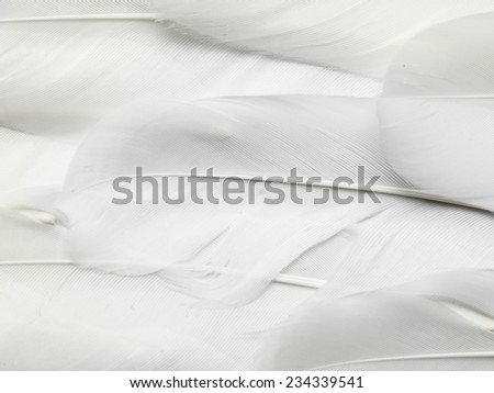 goose feathers - stock photo