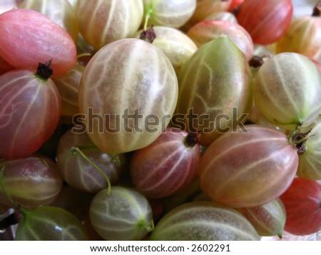 Gooseberries - stock photo