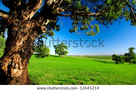 Gorgeous Australian Field with an old tree - stock photo