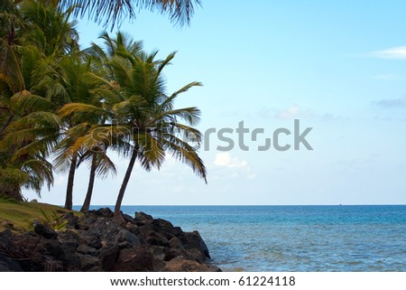 Gorgeous coconut palm trees overlooking the beach in the town center of Luquillo Puerto Rico. There are five different beaches in Luquillo. - stock photo