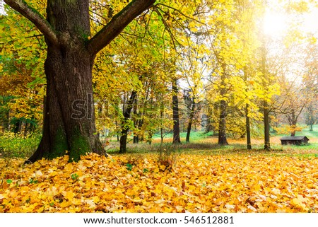 gorgeous forest in autumn, a scenic landscape with pleasant warm sunshine