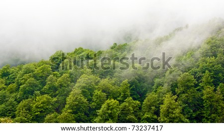 Gorgeous green forest in the fog after rain - stock photo