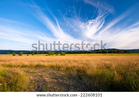 Gorgeous magnificent landscape field road on a meadow with tall yellowed grass and single trees in a field with line of trees on the horizon that separates the blue sky with a unique cloud pattern. - stock photo