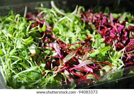 Gorgeous Microgreens - stock photo