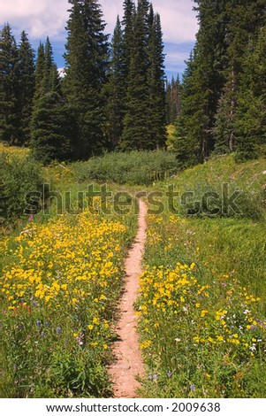 Gorgeous Mountain Trail - stock photo